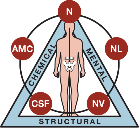 Applied Kinesiology at Mossell Holistic.